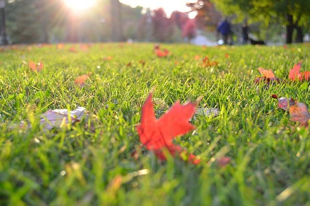 El césped en otoño