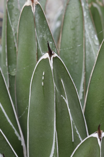 Cactus. viverosgonzalez.com