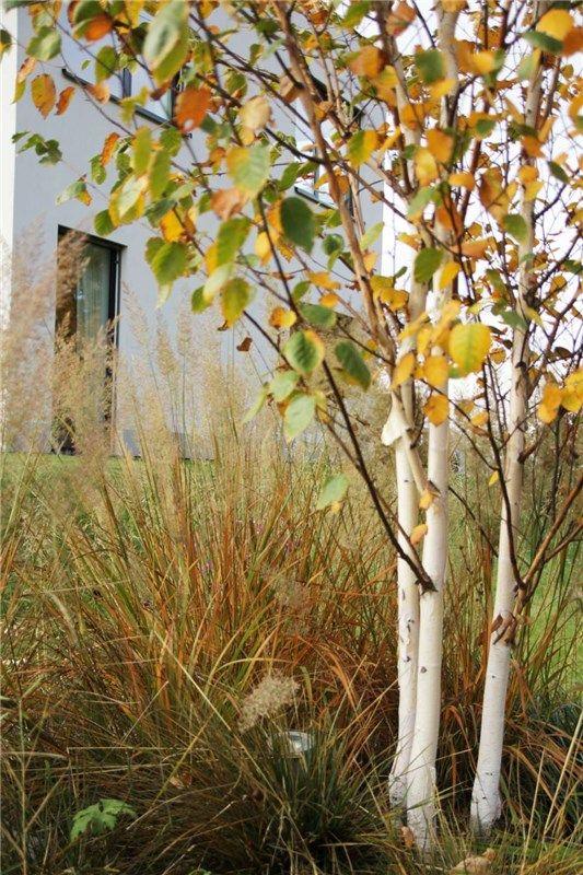 grassy gardens - pinterest